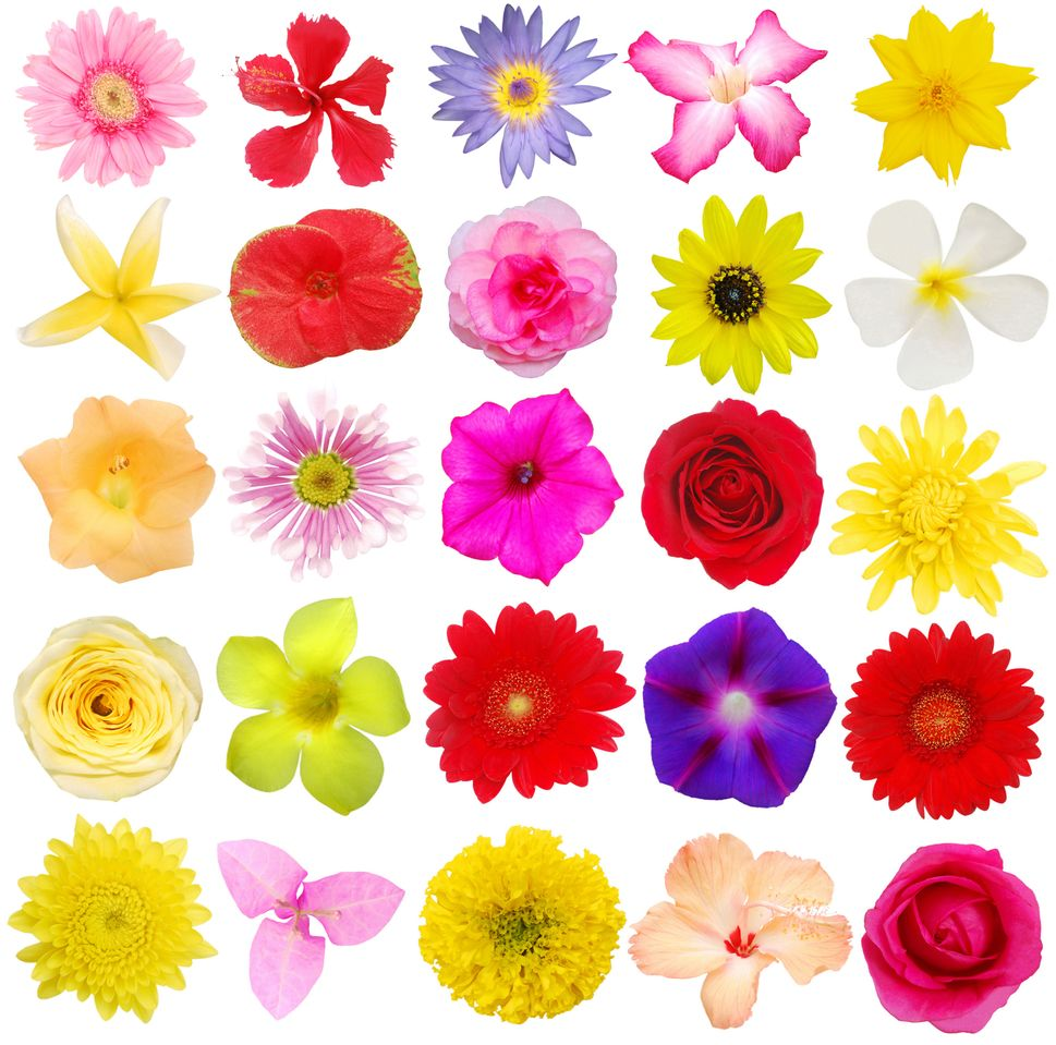 colores-flores1
