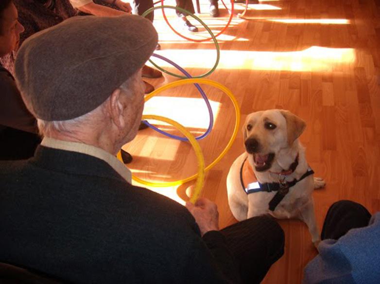 terapias-perros